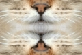 Animali Background Iphone Smartphone Sfondi 02