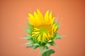 Fiori Foto Gratis Download Desktop 31