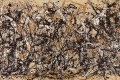 Jackson Pollock - Ritmo d'autunno autumn rhythm number 30