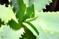 Piante Grasse Foto Gratis Download Desktop 16