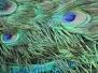 Texture Foto Gratis