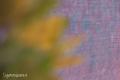 Texture Foto Gratis Download Desktop 15