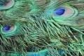 Texture Foto Gratis Download Desktop 29