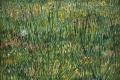 Vincent Van Gogh - Grasgrond patch of grass