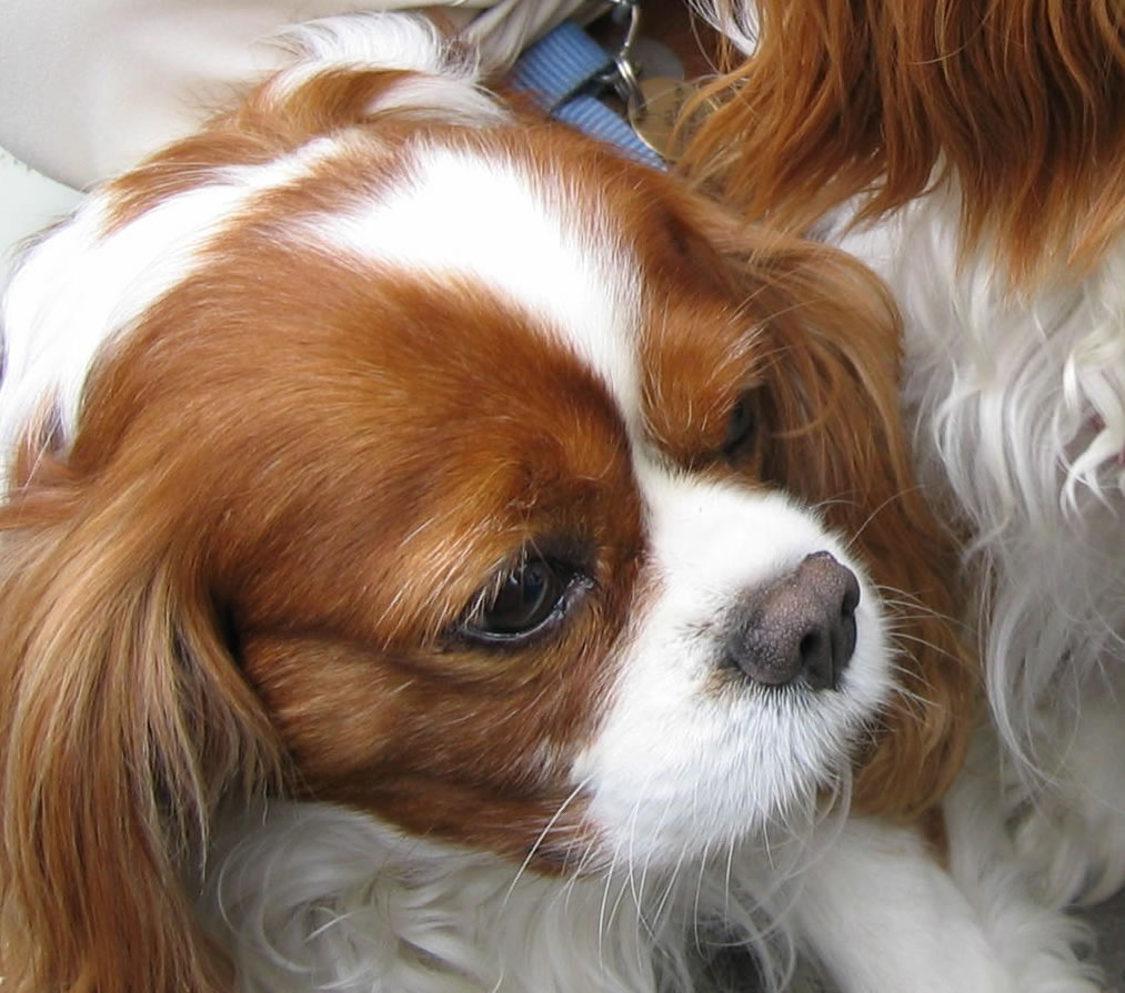 Immagini da scaricare gratis yf18 regardsdefemmes for Foto desktop animali